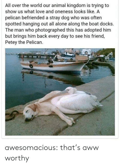 pelican: All over the world our animal kingdom is trying to  show us what love and oneness looks like, A  pelican befriended a stray dog who was often  spotted hanging out all alone along the boat docks.  The man who photographed this has adopted him  but brings him back every day to see his friend,  Petey the Pelican. awesomacious:  that's aww worthy