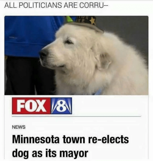 Politicians: ALL POLITICIANS ARE CORRU  FOX 8  NEWS  Minnesota town re-elects  dog as its mayor