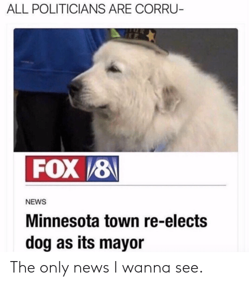 News, Minnesota, and Politicians: ALL POLITICIANS ARE CORRU  NEWS  Minnesota town re-elects  dog as its mayor The only news I wanna see.