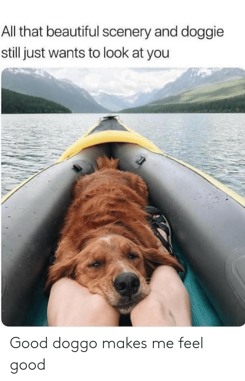 Doggie: All that beautiful scenery and doggie  still just wants to look at you Good doggo makes me feel good