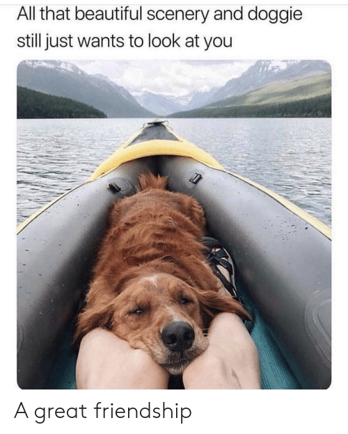 Doggie: All that beautiful scenery and doggie  still just wants to look at you A great friendship