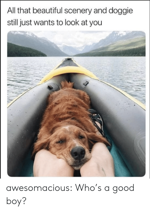 Doggie: All that beautiful scenery and doggie  still just wants to look at you awesomacious:  Who's a good boy?