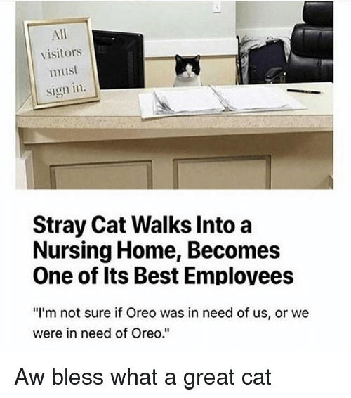 "stray cats: All  visitors  must  Sign in.  Stray Cat Walks Into a  Nursing Home, Becomes  One of Its Best Employees  ""I'm not sure if Oreo was in need of us, or we  were in need of Oreo."" Aw bless what a great cat"