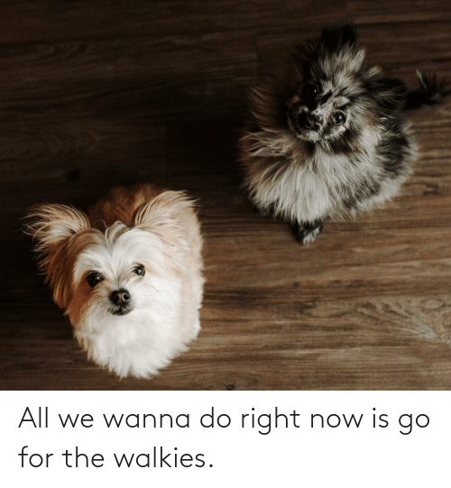 Wanna Do: All we wanna do right now is go for the walkies.