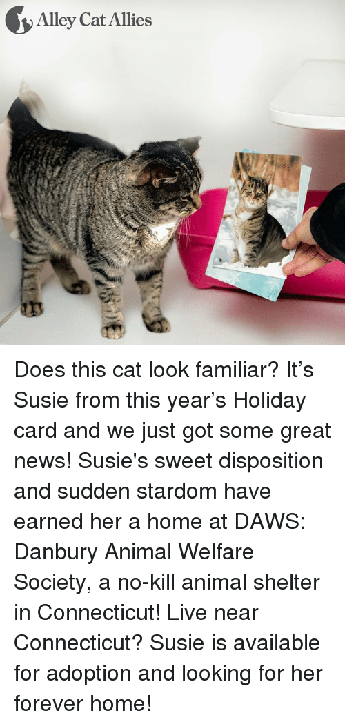 alley cats: Alley Cat Allies Does this cat look familiar? It's Susie from this year's Holiday card and we just got some great news! Susie's sweet disposition and sudden stardom have earned her a home at DAWS: Danbury Animal Welfare Society, a no-kill animal shelter in Connecticut!   Live near Connecticut? Susie is available for adoption and looking for her forever home!