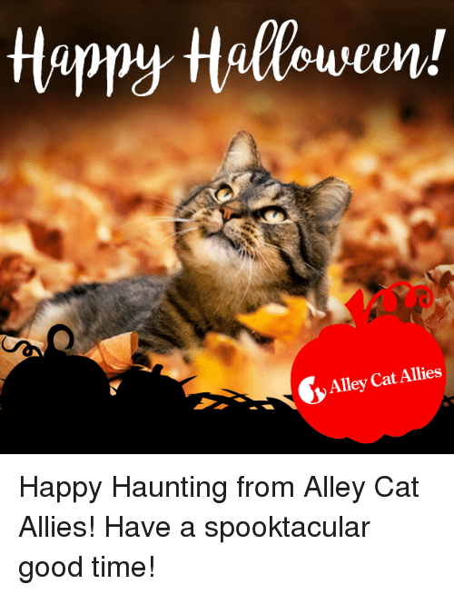 alley cats: Alley Cat Allies Happy Haunting from Alley Cat Allies! Have a spooktacular good time!