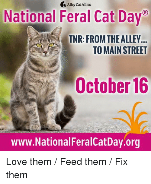 alley cats: Alley Cat Allies  National Feral Cat Day  TNR: FROM THE ALLEY  TO MAIN STREET  October 16  www.NationalFeralCatDay.org Love them / Feed them / Fix them