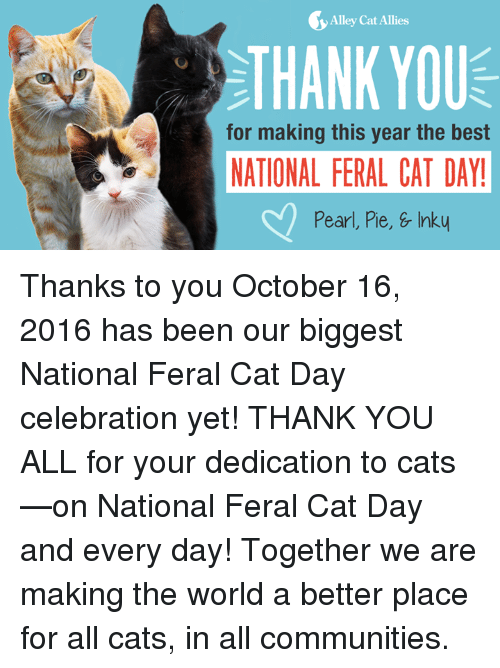 alley cats: Alley Cat Allies  THANK YOU  for making this year the best  NATIONAL FERAL CAT DAY!  Pearl, Pie, & Inky Thanks to you October 16, 2016 has been our biggest National Feral Cat Day celebration yet! THANK YOU ALL for your dedication to cats—on National Feral Cat Day and every day! Together we are making the world a better place for all cats, in all communities.