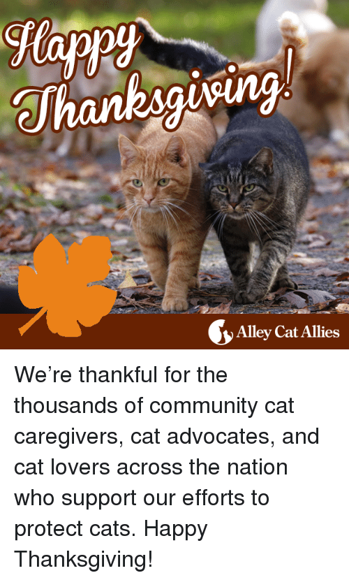 alley cats: Alley Cat Allies We're thankful for the thousands of community cat caregivers, cat advocates, and cat lovers across the nation who support our efforts to protect cats. Happy Thanksgiving!