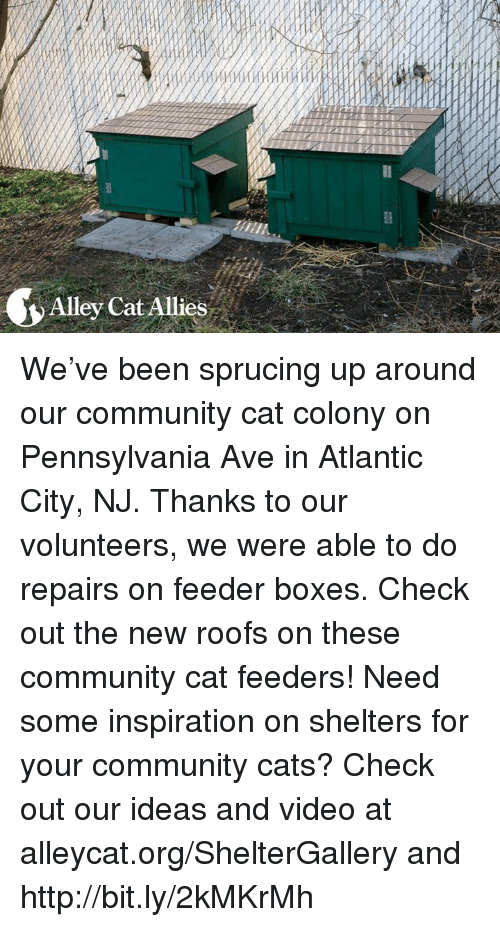 alley cats: Alley Cat Allies We've been sprucing up around our community cat colony on Pennsylvania Ave in Atlantic City, NJ. Thanks to our volunteers, we were able to do repairs on feeder boxes. Check out the new roofs on these community cat feeders! Need some inspiration on shelters for your community cats? Check out our ideas and video at alleycat.org/ShelterGallery and http://bit.ly/2kMKrMh