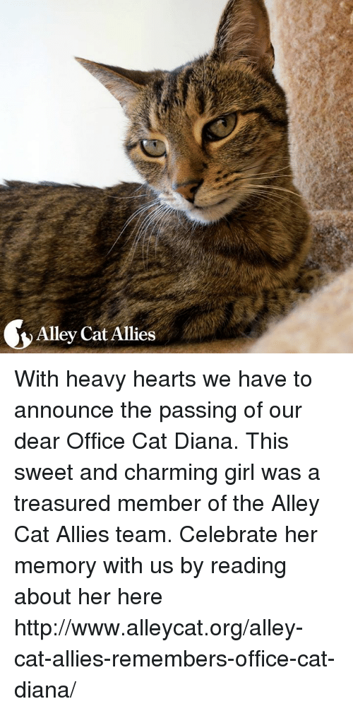 alley cats: Alley Cat Allies With heavy hearts we have to announce the passing of our dear Office Cat Diana. This sweet and charming girl was a treasured member of the Alley Cat Allies team. Celebrate her memory with us by reading about her here http://www.alleycat.org/alley-cat-allies-remembers-office-cat-diana/