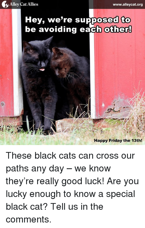 alley cats: Alley Cat Allies  www.alleycat.org  Hey, we're supposed to  be avoiding each other!  Happy Friday the 13th! These black cats can cross our paths any day – we know they're really good luck! Are you lucky enough to know a special black cat? Tell us in the comments.