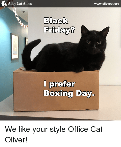 alley cats: Alley Cat Allies  www.alleycat.org  Nack  Fridays  I prefer  Boxing Day. We like your style Office Cat Oliver!