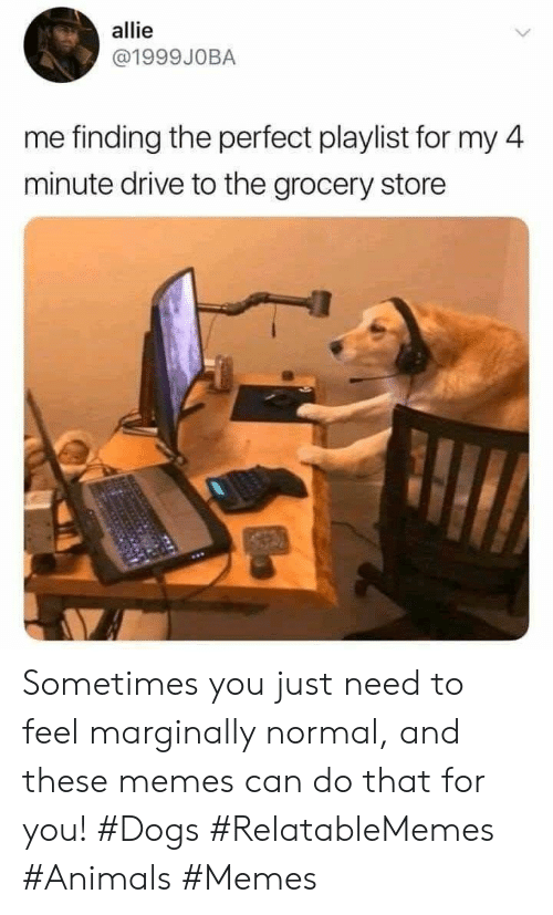 Animals Memes: allie  @1999JOBA  me finding the perfect playlist for my 4  minute drive to the grocery store Sometimes you just need to feel marginally normal, and these memes can do that for you! #Dogs #RelatableMemes #Animals #Memes