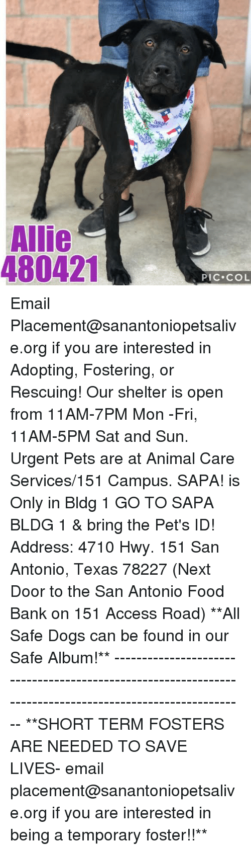 food bank: Allie  480421  PIC COL Email Placement@sanantoniopetsalive.org if you are interested in Adopting, Fostering, or Rescuing!  Our shelter is open from 11AM-7PM Mon -Fri, 11AM-5PM Sat and Sun.  Urgent Pets are at Animal Care Services/151 Campus. SAPA! is Only in Bldg 1 GO TO SAPA BLDG 1 & bring the Pet's ID! Address: 4710 Hwy. 151 San Antonio, Texas 78227 (Next Door to the San Antonio Food Bank on 151 Access Road)  **All Safe Dogs can be found in our Safe Album!** ---------------------------------------------------------------------------------------------------------- **SHORT TERM FOSTERS ARE NEEDED TO SAVE LIVES- email placement@sanantoniopetsalive.org if you are interested in being a temporary foster!!**