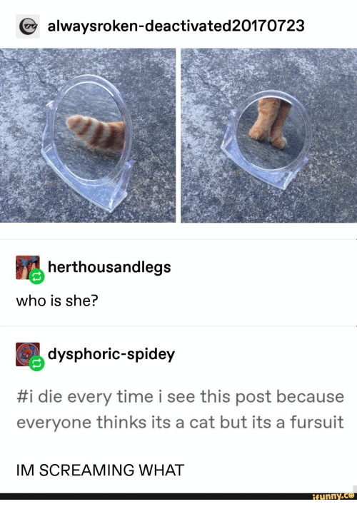 Time, Cat, and Who: alwaysroken-deactivated20170723  herthousandlegs  who is she?  dysphoric-spidey  #i die every time i see this post because  everyone thinks its a cat but its a fursuit  IM SCREAMING WHAT  ifunny.co