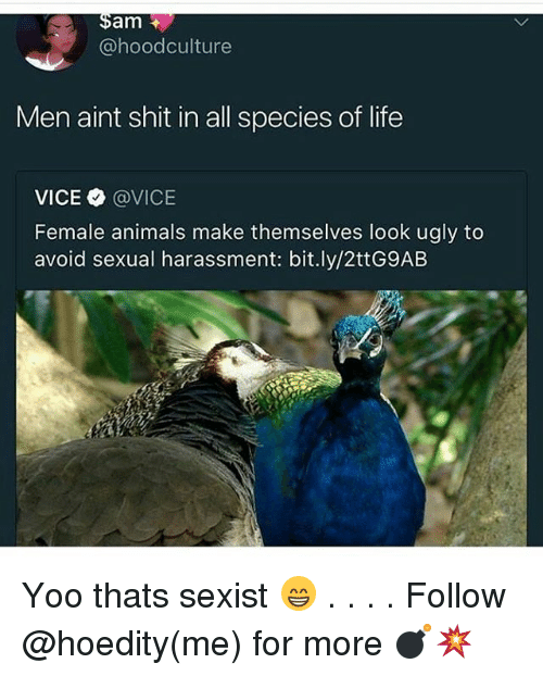avoidance: am  @hoodculture  Men aint shit in all species of life  VICE Φ @VICE  Female animals make themselves look ugly to  avoid sexual harassment: bit.ly/2ttG9AB Yoo thats sexist 😁 . . . . Follow @hoedity(me) for more 💣💥
