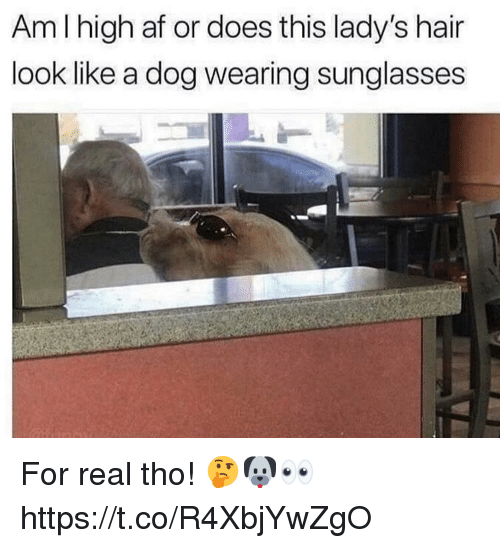 wearing sunglasses: Am I high af or does this lady's hair  look like a dog wearing sunglasses For real tho! 🤔🐶👀 https://t.co/R4XbjYwZgO