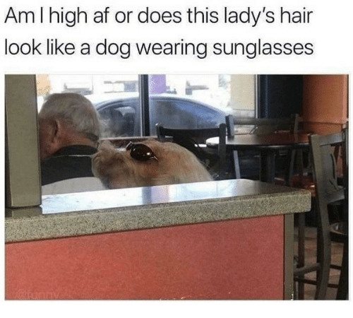 wearing sunglasses: Am I high af or does this lady's hair  look like a dog wearing sunglasses