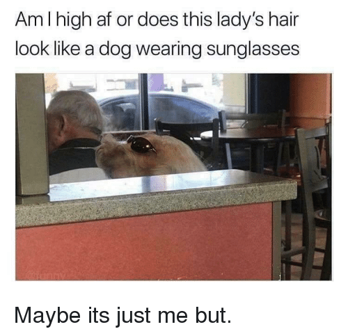 wearing sunglasses: Am I high af or does this lady's hair  look like a dog wearing sunglasses  2 Maybe its just me but.