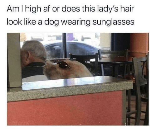 wearing sunglasses: Am I high af or does this lady's hair  look like a dog wearing sunglasses  2