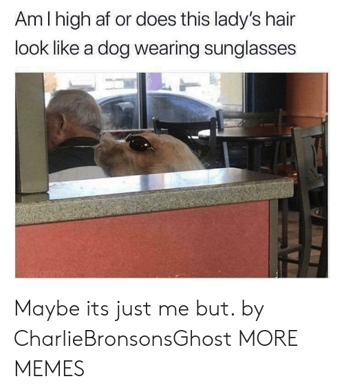 wearing sunglasses: Am I high af or does this lady's hair  look like a dog wearing sunglasses  2 Maybe its just me but. by CharlieBronsonsGhost MORE MEMES