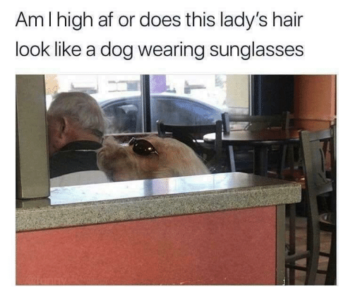 wearing sunglasses: Am I high af or does this lady's hair  look like a dog wearing sunglasses  Kartinny