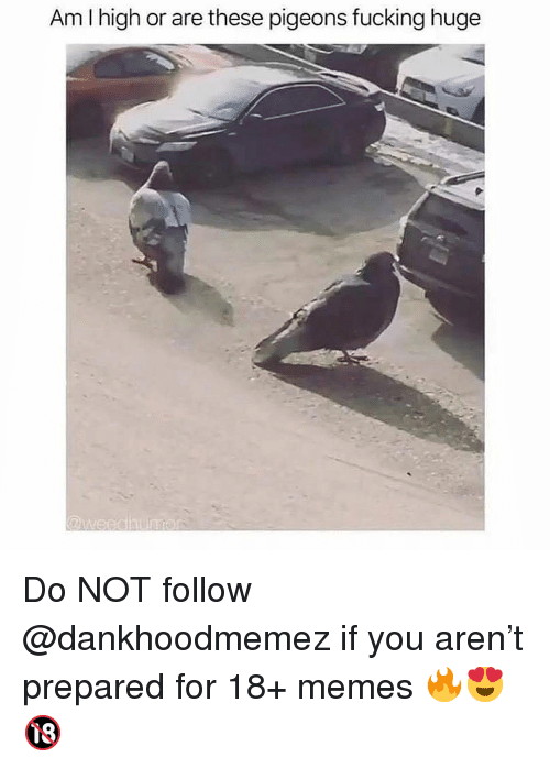 Fucking, Memes, and 🤖: Am I high or are these pigeons fucking huge Do NOT follow @dankhoodmemez if you aren't prepared for 18+ memes 🔥😍🔞