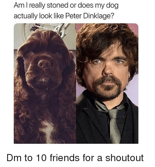 Peter Dinklage: Am I really stoned or does my dog  actually look like Peter Dinklage? Dm to 10 friends for a shoutout