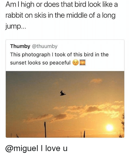 skis: Am l high or does that bird look like a  rabbit on skis in the middle of a long  jump.  Thumby @thuumby  This photograph I took of this bird in the  sunset looks so peaceful @miguel I love u