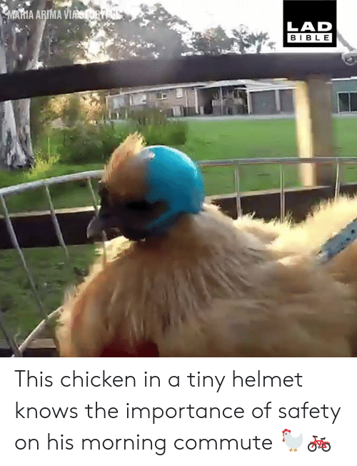 helmet: AMA ARIMA W  LAD  BIBLE This chicken in a tiny helmet knows the importance of safety on his morning commute 🐓🚲