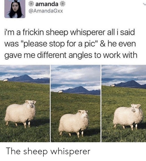 "Work, Sheep, and All: amanda  @AmandaGxx  i'm a frickin sheep whisperer all i said  was ""please stop for a pic"" & he even  gave me different angles to work with The sheep whisperer"
