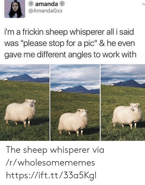"Work, Sheep, and Via: amanda  @AmandaGxx  i'm a frickin sheep whisperer all i said  was ""please stop for a pic"" & he even  gave me different angles to work with The sheep whisperer via /r/wholesomememes https://ift.tt/33a5Kgl"