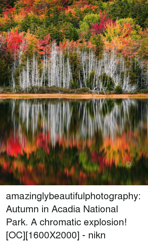 Tumblr, Blog, and Http: amazinglybeautifulphotography:Autumn in Acadia National Park. A chromatic explosion![OC][1600X2000] - nikn