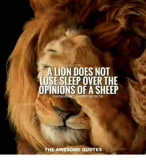 AMBITION A LION DOES NOT LOSE SLEEP OVER THE PINIONS OF A SHEEP Classy Pictures Of Lion With Diss Quotes