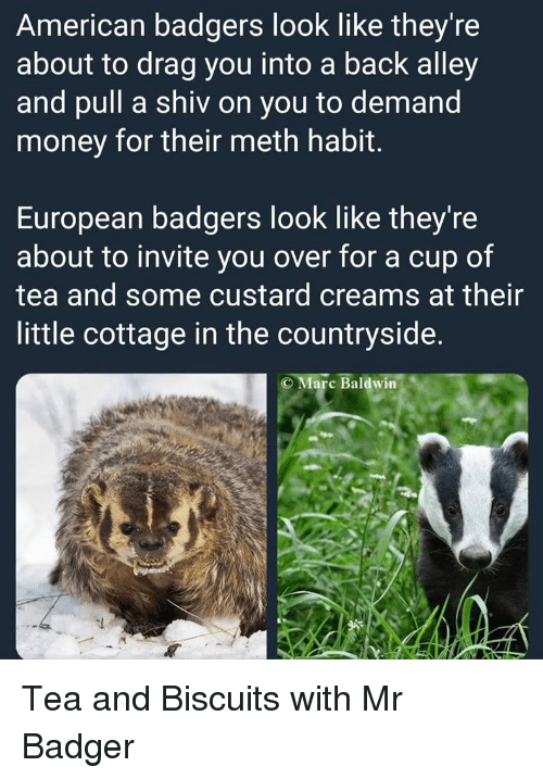 badger: American badgers look like they're  about to drag you into a back alley  and pull a shiv on you to demand  money for their meth habit.  European badgers look like they're  about to invite you over for a cup of  tea and some custard creams at their  little cottage in the countryside.  Marc Baldwin Tea and Biscuits with Mr Badger