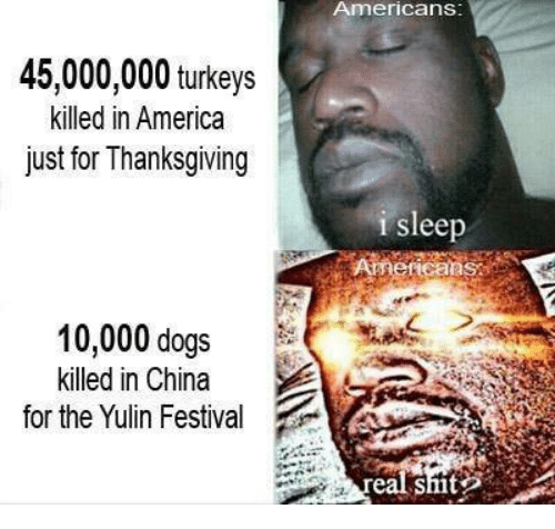 America, Dogs, and Memes: Americans  45,000,000 turkeys  killed in America  just for Thanksgiving  i sleep  Americans  10,000 dogs  killed in China  for the Yulin Festival