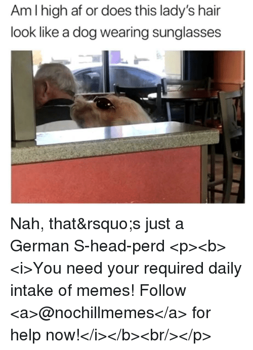 Af, Head, and Memes: Amlhigh af or does this lady's hair  look like a dog wearing sunglasses Nah, that&rsquo;s just a German S-head-perd <p><b><i>You need your required daily intake of memes! Follow <a>@nochillmemes</a> for help now!</i></b><br/></p>