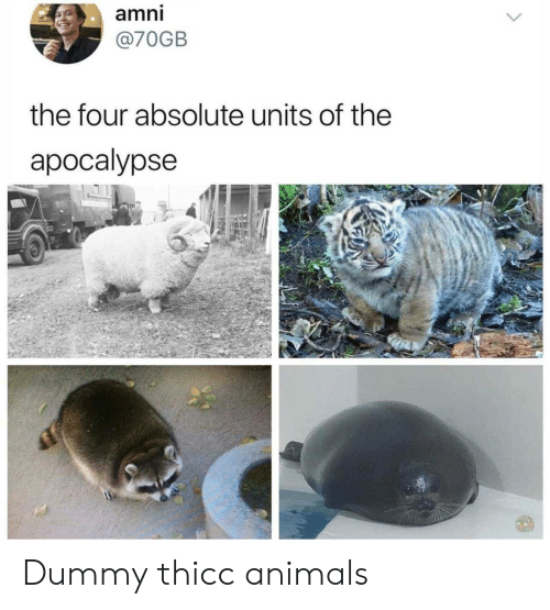 the four: amni  @70GB  the four absolute units of the  apocalypse Dummy thicc animals