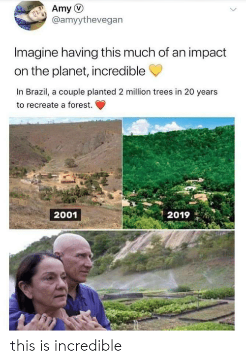 This Much: Amy  @amyythevegan  Imagine having this much of an impact  on the planet, incredible  In Brazil, a couple planted 2 million trees in 20 years  to recreate a forest.  2001  2019 this is incredible