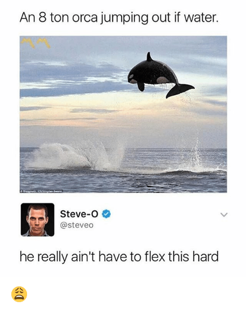 orca: An 8 ton orca jumping out if water  Steve-O  @steveo  he really ain't have to flex this hard 😩