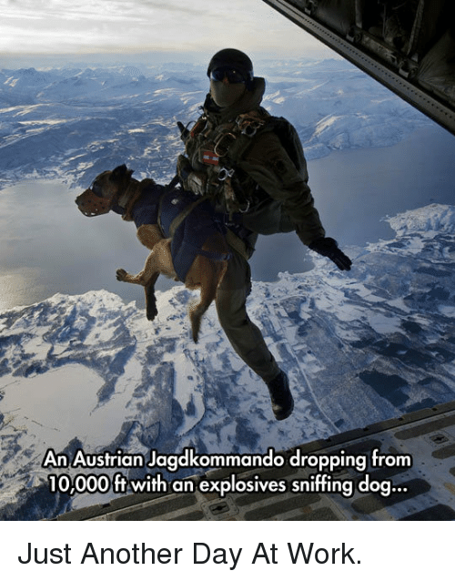 Work, Austrian, and Another: An Austrian Jagdkommando dropping from  10.000ft with an explosives sniffing doq... <p>Just Another Day At Work.</p>