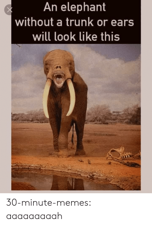 Memes, Tumblr, and Blog: An elephant  without a trunk or ears  will look like this 30-minute-memes:  aaaaaaaaah