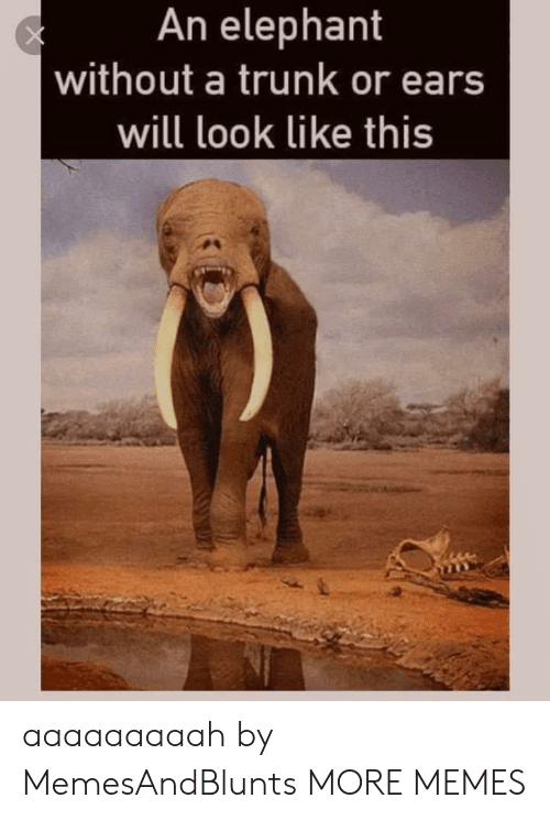 Dank, Memes, and Target: An elephant  without a trunk or ears  will look like this aaaaaaaaah by MemesAndBlunts MORE MEMES