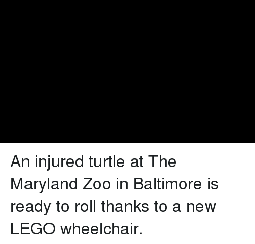 Maryland: An injured turtle at The Maryland Zoo in Baltimore is ready to roll thanks to a new LEGO wheelchair.