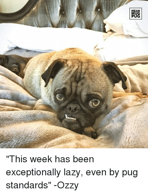 "Ozzies: AN  NGG ""This week has been exceptionally lazy, even by pug standards"" -Ozzy"