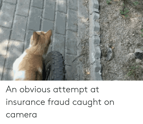 caught on camera: An obvious attempt at insurance fraud caught on camera