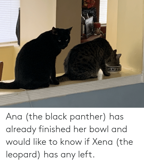 Black Panther: Ana (the black panther) has already finished her bowl and would like to know if Xena (the leopard) has any left.