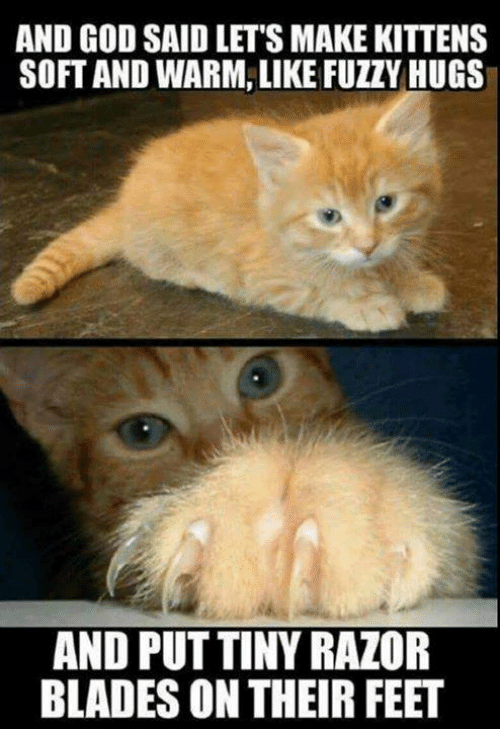 God, Memes, and Kittens: AND GOD SAID LET'S MAKE KITTENS  SOFT AND WARM, LIKE FUZZY HUGS  AND PUT TINY RAZOR  BLADES ON THEIR FEET