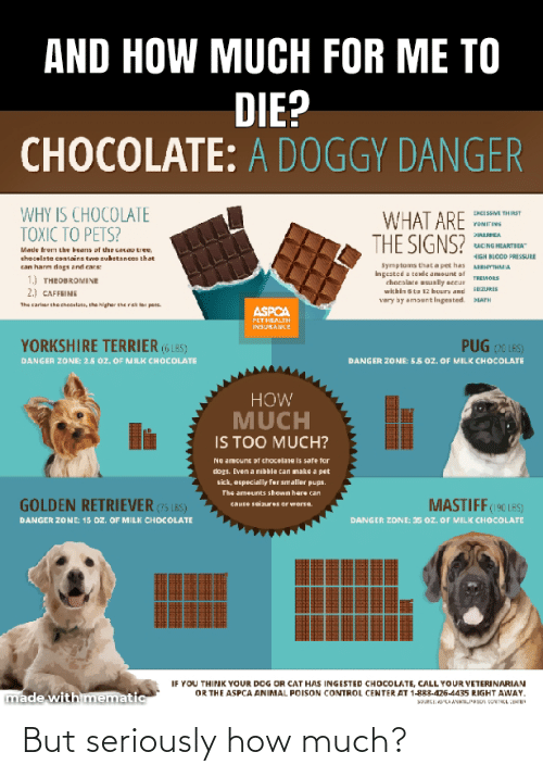 poison control: AND HOW MUCH FOR ME TO  DIE?  CHOCOLATE: A DOGGY DANGER  WHY IS CHOCOLATE  TOXIC TO PETS?  WHAT ARE  THE SIGNS?  ENCISSM THIRST  YOMITING  PIARHEA  RACING HEARTIEA  Made trom the heans af the cacao tree,  HIGH BLOOD PRESSURE  chocelate contains tvo substances that  Symptoms thata pet has  Ingested a tende amount of  chocslate usually accur  within s tu 12 huurs and  very ay amountlIngested.  can harm dogs and cats  ARHYHMA  1.) THEOBROMINE  2.) CAFFRINE  TREMORS  ZURIS  PATH  The sarlar the checalaa, ihe higher the rek ter pas.  ASPCA  PETHEALTH  INSURANCE  PUG ( LES)  DANGER ZONE: S5 0oz. OF MILK CHOCcOLATE  YORKSHIRE TERRIER (6 L85)  DANGER ZONE: 2.5 oz. OF MILK CHOCCOLATE  HOW  MUCH  IS TOO MUCH?  No amount of chocelare is safe fer  dogs. Even a nibkle can make a pet  sick, especially for smaller pups.  The ameunts shown here can  MASTIFF(19C LES)  DANGER ZONE: 35 oz. OF MILK CHOCOLATE  GOLDEN RETRIEVER (75 18S)  Cause seiures or worse.  DANGER ZONE: 15 OZ. OF MILK CHOCOLATE  IF YOU THINK YOUR DOG OR CAT HAS INGESTED CHOCOLATE, CALL YOUR VETERINARIAN  OR THE ASPCA ANIMAL POISON CONTROL CENTER AT 1-883-426-4435 RIGHT AWAY.  made with mematic  SORCI: SCAANAPOSO ONTKL CE But seriously how much?
